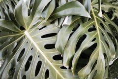 Palmtree Στοκ Εικόνες