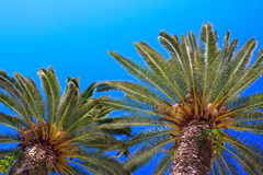 Palmtree Stock Image