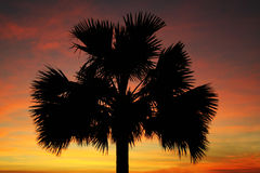 Palmtree Stock Photo