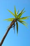 Palmtree Photographie stock