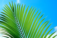 Palmtree Royalty Free Stock Photos