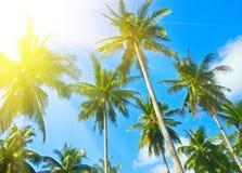 Palmtree Stock Images