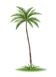 Palmtree Royalty Free Stock Image