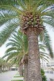 Palmtree Lizenzfreie Stockfotos