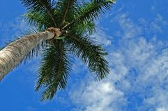 palmtree Royaltyfria Bilder