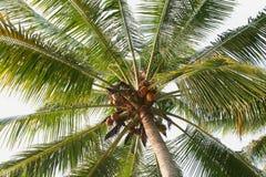 Palmtree Foto de archivo libre de regalías