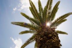 palmtree 免版税图库摄影