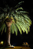 Palmtree Stockfoto