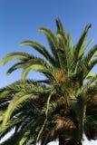 Palmtree - 01 Lizenzfreie Stockfotos