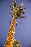 Palmtree Photos stock