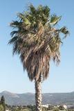 Palmtree стоковые фото
