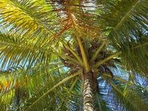 Palmtree Fotografia Stock