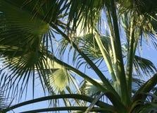 palmtree royaltyfri fotografi