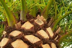 Palmtree Immagini Stock