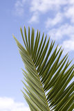 Palmtree Royalty Free Stock Photography