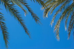 Palmtree Στοκ φωτογραφία με δικαίωμα ελεύθερης χρήσης