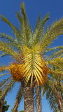 Palmtree Στοκ Φωτογραφίες