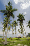 Palmtree. Tropical palm trees in the phi phi island, tailand Royalty Free Stock Photography