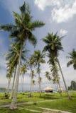 Palmtree Royalty Free Stock Photography
