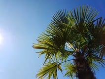 Palmtree Obraz Royalty Free