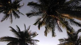 Palmtree Stockfotos