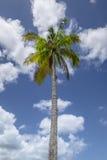 Palmtree arkivbild