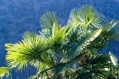 Palmtree in backlight royalty-vrije stock foto