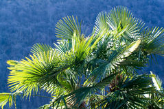 Palmtree in backlight Royalty Free Stock Photo