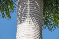 Palmtree bark Stock Image