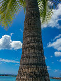 Palmtree Bark Stock Photos