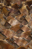 Palmtree bark texture Royalty Free Stock Photography