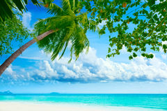 Palmtree on the beach. Beautiful tropical beach with palmtree on foreground royalty free stock photos