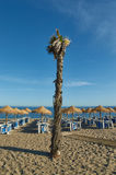 Palmtree in the beach of Marbella. Palmtree in Marbella beach with lots of beach umbrellas Royalty Free Stock Photos