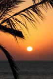 Palmtree beach sunset Royalty Free Stock Photography