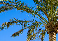 A palmtree and a bird. Royalty Free Stock Image