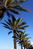 Palmtree and blue sky Stock Images