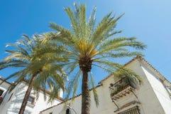 Palmtree bredvid balkong Arkivfoton