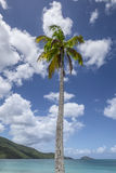 Palmtree in the caribbean Stock Photography