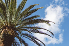 Palmtree and clouds. The top of a palmtree under the november sky, in Bari, Italy royalty free stock photography