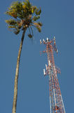 Palmtree and comunication antenna Stock Image