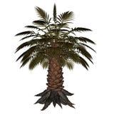 Palmtree, 3D palm - geef terug Stock Foto