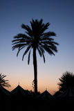 Palmtree by dawn Stock Image