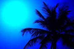 palmtree de la silueta Fotos de archivo libres de regalías