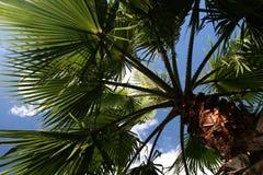 Palmtree dream Royalty Free Stock Image