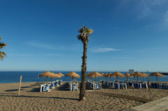 Palmtree on dunes. With blue sky in Marbella, with sea on the background Stock Image
