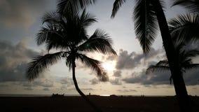 Palmtree e silhueta dos povos Fotos de Stock Royalty Free