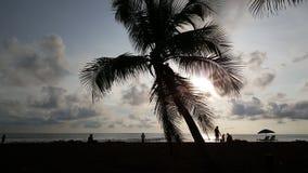 Palmtree e silhueta dos povos Imagem de Stock
