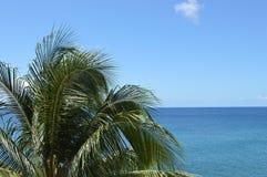 Palmtree en overzees Stock Afbeeldingen