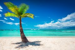 Palmtree en tropisch strand Dominicaanse Republiek royalty-vrije stock fotografie