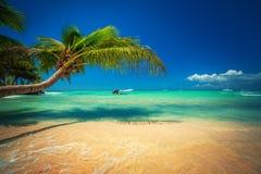 Palmtree en tropisch strand Exotisch eiland Saona in Caraïbische overzees, Dominicaanse Republiek royalty-vrije stock afbeelding